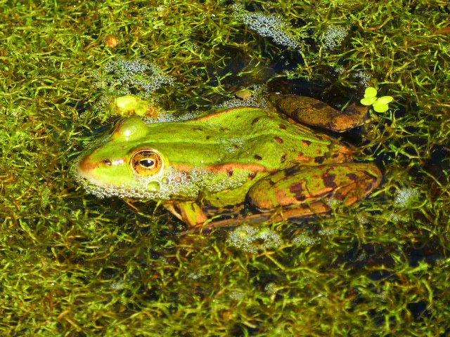 Frosch rickenbach - Die ruhig-ländliche Beschaulichkeit