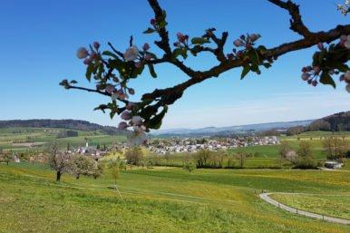 Rickenbach Landschaft 386x257 - Krümmigasse 15: 3 1/2 Zimmer-Wohnung