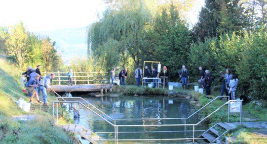 IMG 0538 527x286 - Ausfischen am Mühleweiher