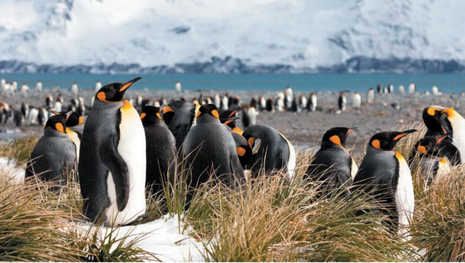 """Pinguine 946x535 - Multivisions-Show mit Fredy Thürig: """"Pinguine und ihre tierischen Freunde"""""""
