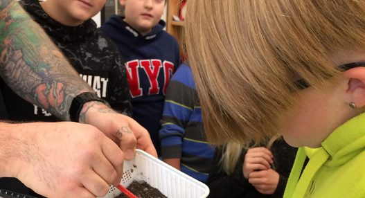 Spinnenbesuch 11.2019 03 527x286 - Spinnenbesuch in der Schule Pfeffikon